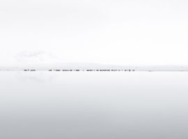 JÖKULSÁRLÓN SEALS – Jökulsárlón, Islande