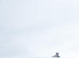 LOUP – Ilulissat, Groenland